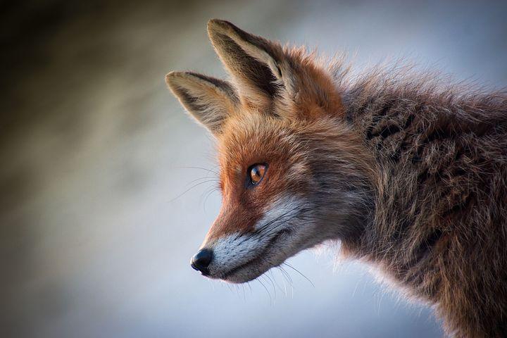 Della volpe, del leone e di quanto la lealtà sia sopravvalutata per unostatista